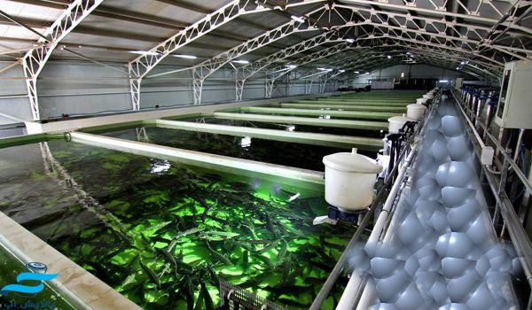تصفیه آب استخرهای ماهی